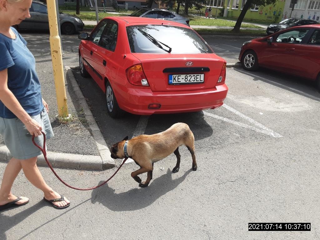 Nájdený pes BO