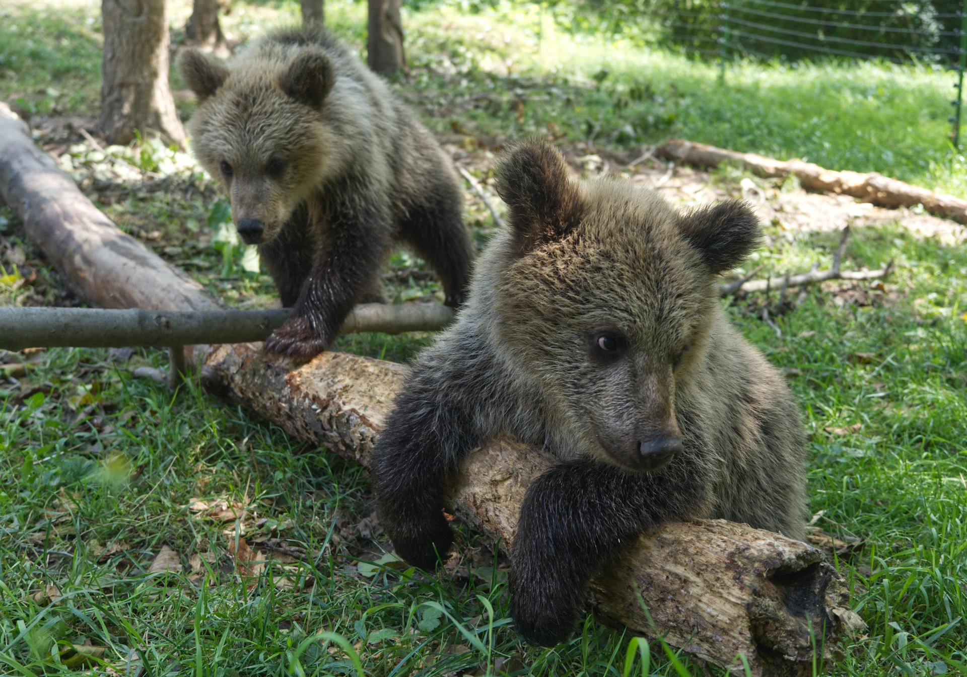 MedviedataMasaFilip25